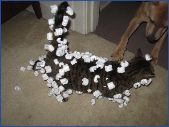 Статика у кошки